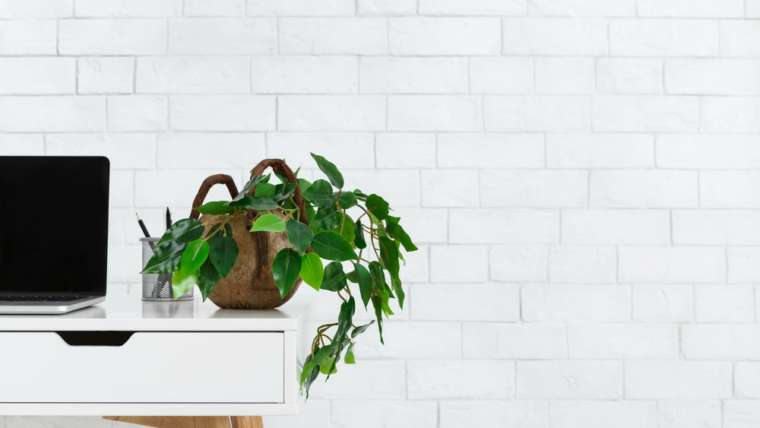 Using Plants in Home Staging and Home Decorating Effectively