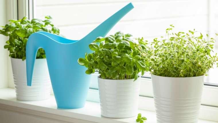 Create Your Own Kitchen Herb Garden