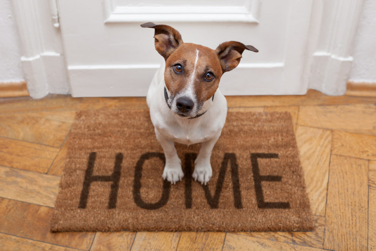 staging a home with pets