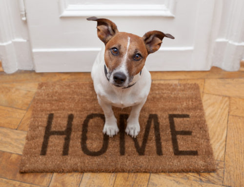 Top Tips for Staging a Home With Pets