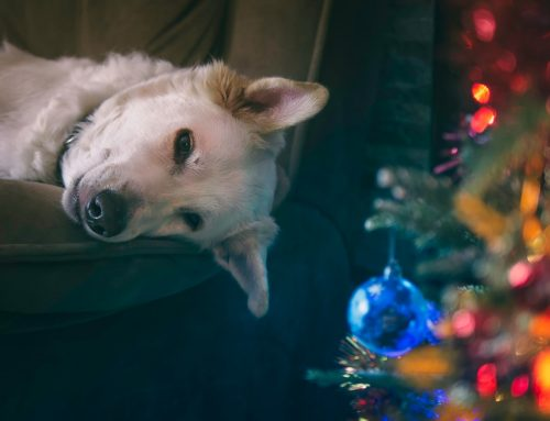 Holiday Decorating and Pet Safety