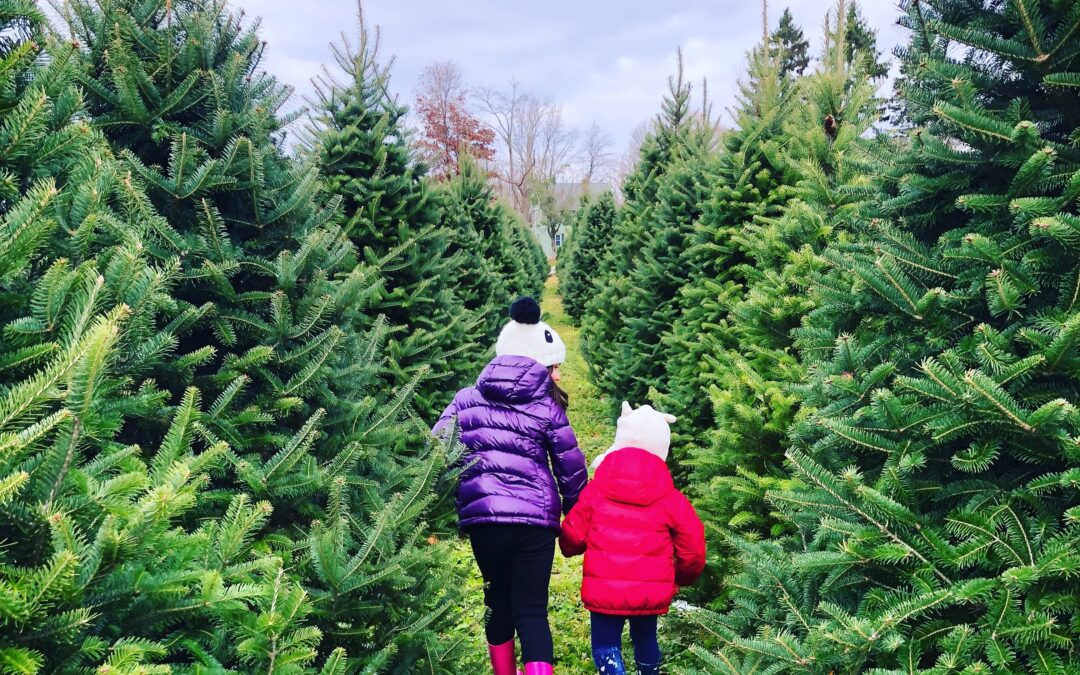 How To Choose the Right Live Christmas Tree