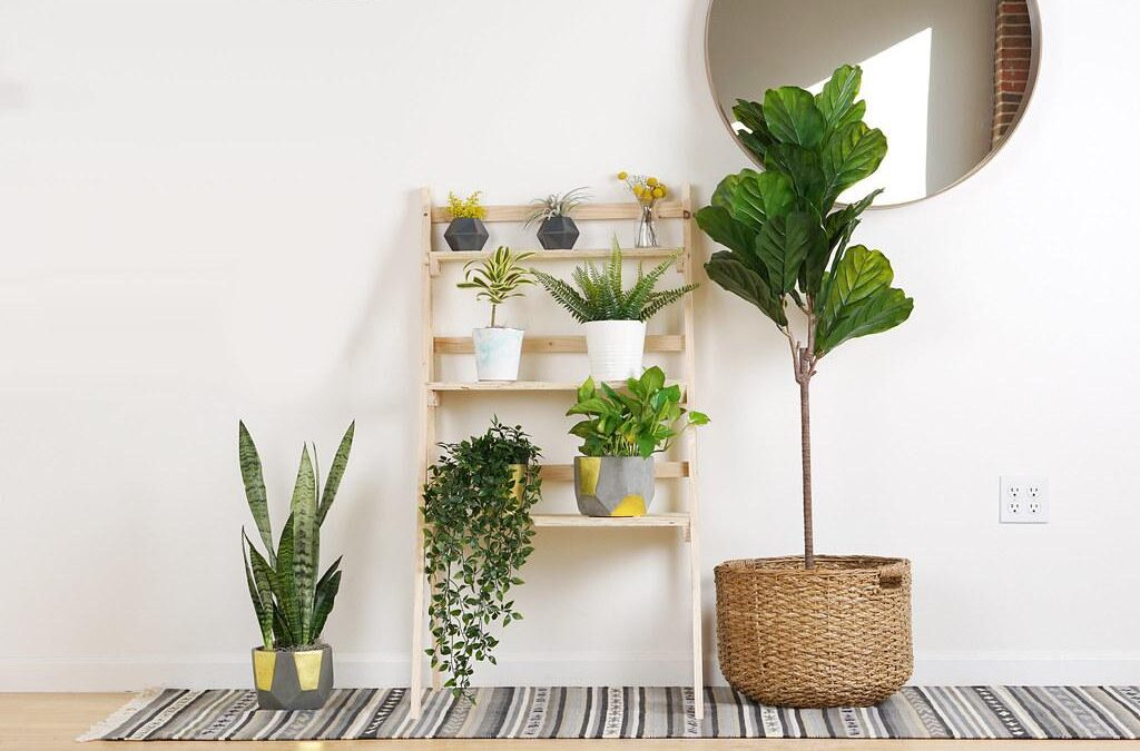 How To Redesign Your Home With Houseplants